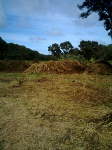 Composting Greenwaste